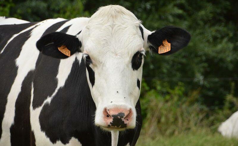 Produtora de leite
